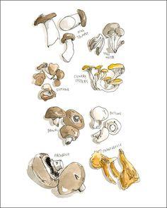 farmers market, food, art, wendi macnaughton, market farmer, kitchen, illustr, print, mushrooms