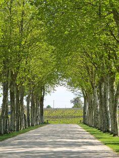 Bordeaux Vineyard (France)