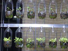 indoor gardening idea! Spray painting tthe bottles would really look great!