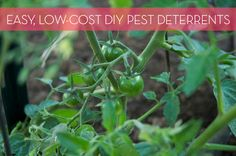 How to: Make Inexpensive, DIY All-Natural Pest Deterrents for Your Garden---------       Homemade Insecticide Spray     DIY Ant and Gnat Remover     Rabbit Deterrent      All-Purpose Critter Deterrents