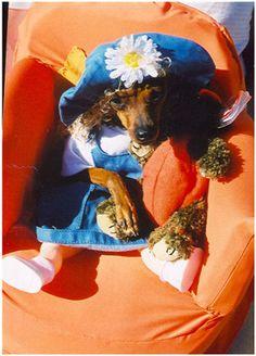 Halloween Photo Contest:Penny