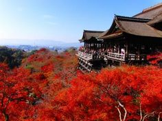 Foliages at Kiyomizu Temple, Kyoto  Where I would love to travel one day!!!