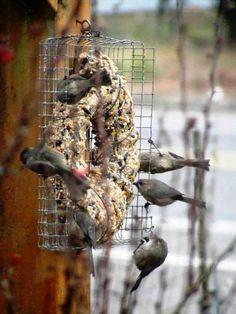 Make a Winter bird seed wreath | Flea Market Gardening