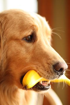 Yes... We have no bananas...
