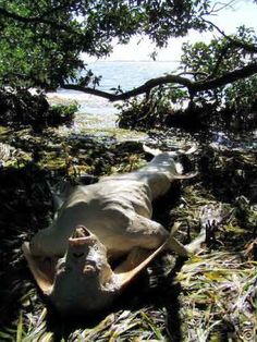 images mysterious unusual animals | Images Of Strange Mermaid Found On Beach