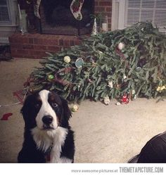 Guiltiest looking dog ever…