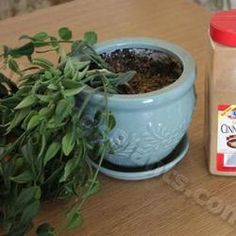 A little cinnamon in your soil will help keep the bugs away from your seedlings/cuttings