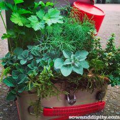 Vintage lunchbox planter, see more junkin' garden ideas in this post. #gardenjunk