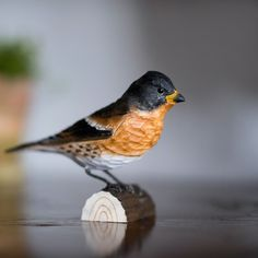 Our #handcarved #decobird #brambling is as colourful a character as the real male brambling. With springs approach his colours blossom revealing a shimmering jet black head and bright orange chest. The female bramblings plumage is plain, in comparison. With shades of grey on her cheeks and rusty orange coverts. To us though, she is still just as magnificent as her male counterpart. Photo: @metteottosson