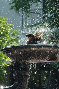 birdie bath time ....love, love, love this!