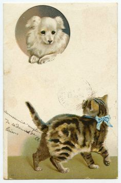 CHIEN  CHAT  DOG  AND CAT