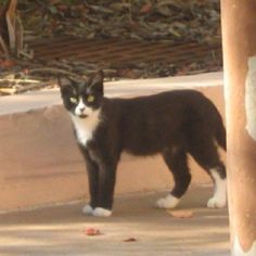 This is Oreo the mascot for Save Loews Cat. She was One of the trapped cats