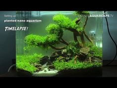 Setting up planted nano aquarium - timelapse - YouTube