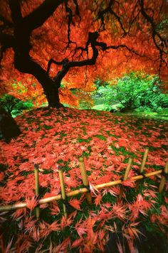 Fall in Portland, Oregon's Japanese Garden.