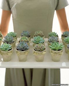 succulents and other DIY gifts by Martha
