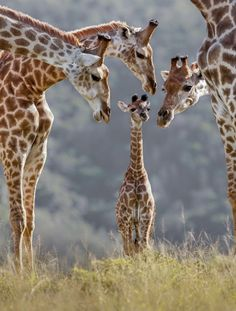 "Africa ""New arrival"". Kariega Game Reserve, Eastern Cape, South Africa ©Brendon Jennings"