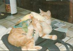 Cats & Birds