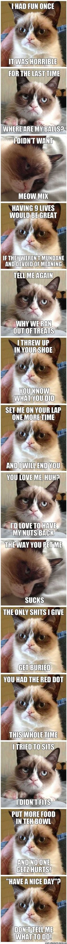 Grumpy Cat compilation