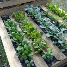 garden cover, greenthumb, pallet