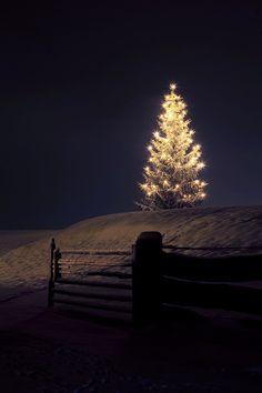 dark night, xmas trees, silent night, white lights, christma tree, christmas lights, country christmas, christmas trees, outdoor christmas