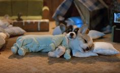 sleeping dogs, anim, sleepy time, little puppies, corgi puppies, pajama, night night, sweet dreams, nighty night