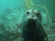 Harbor Seal- this would be the coolest thing ever to see up close & personal!!