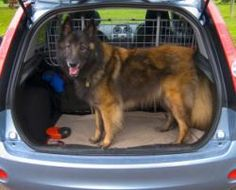 Dead Dog Illustrates Peril Of Leaving Pets Unattended In Cars
