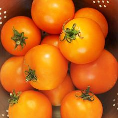 'Solar Power' Tomato.  New variety 2012
