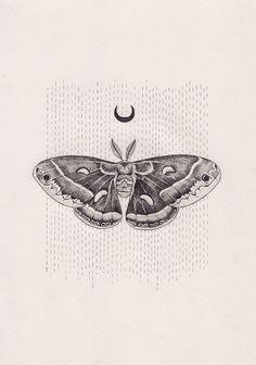 Lunar moth by Peter Carrington