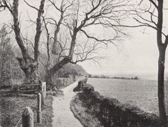 A 1909 photograph of the Sandwalk near Down House, the path where Darwin did a lot of his thinking. #Darwin