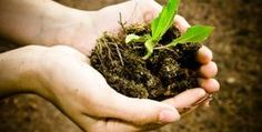 Restoring Your Soil — Tips to Make Your Garden Greener: http://life.gaiam.com/article/restoring-your-soil #gardening