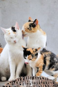 .3 beautiful cats ()()