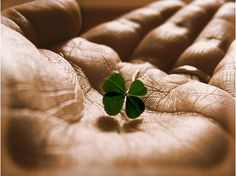181. Find a four leaf clover