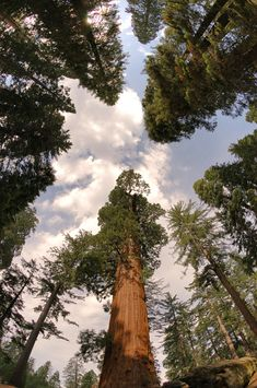 Sequoia National Park, one if my favorite places.