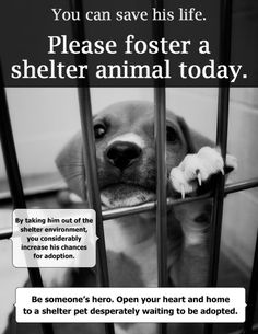You can save his life. Please foster an animal today.