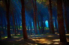 Blue Forest, Lazio, Italy