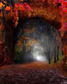 forests, tree, autumn fall, dream, path, fall pictur, beauti, road, forest portal