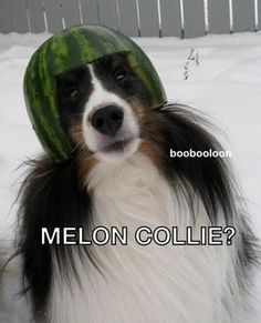 Melon Collie- this is amazing.