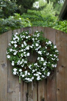 White Impatien Wreath. White garden entrance to Sandy Woodley's one-third acre property, Tigard, Oregon. Michael Lloyd, The Oregonian.