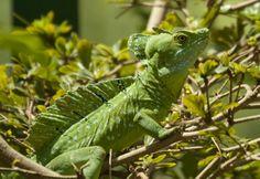 lizard, zoo pictur, nashvill zoo