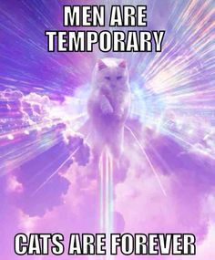 cats, anim, laugh, forev, funny pictures, funni, kitti, cat ladi, thing