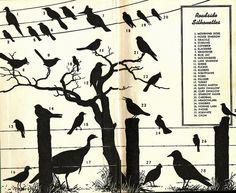Roadside Bird Silhouettes by Calsidyrose, via Flickr