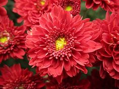 Fall is in the air... and mums are everywhere!