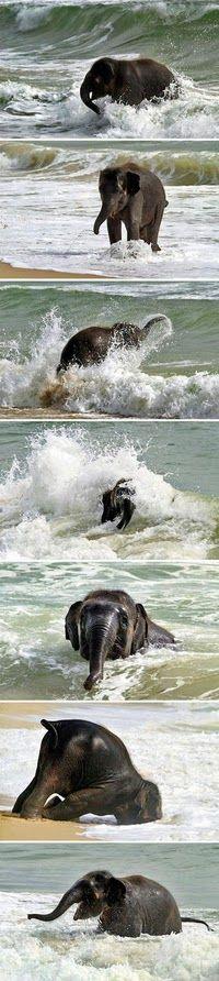 Baby elephant on a beach. Aww! ♥