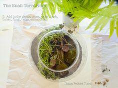 How to Assemble a Forest Terrarium for Snails