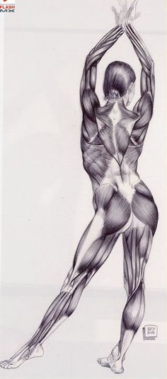 """Human Anatomy by Rey Bustos  My husband: """"Why do people become so obsessed over the 'hotness' of celebritities? They're people, like us. We're all made of the same blood, skin and bones. Why are theirs any different because a large group of people validate them daily about the way a team of people keep them looking?"""""""