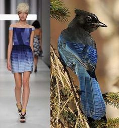 Stellar's Jay | Bird-inspired Fashion