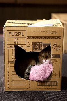 """When I went to the local store, they had a ton of boxes, a lot of them really sturdy that they were going to cut up and recycled.  I took a few & the cats love them. Once the cats """"demolish them LOL"""", I just get more,  Plus being cardboard I have one cat who likes to chew.  BUT, remove ALL labels & tape, they are sticky & if the cat chews on them it can get caught in their throat or teeth. (Cat&Box in pic is not mine)"""