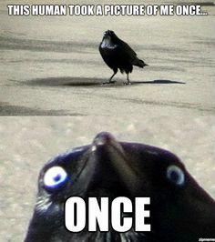 Insane Crow