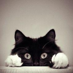white paws!